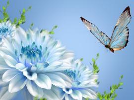 Butterflys  Desktops Slides Backgrounds