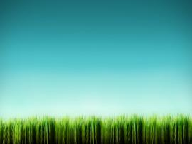 Cartoon Grass  Cartoon Picture Backgrounds