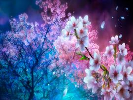 Cherry Blossom Presentation Backgrounds