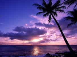 Cloudy Sunset Palm Tree Quality Backgrounds