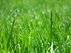 Cover Light Grass Carpet Design 2560x1600 Pixel   Template Backgrounds