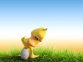 Cute Duck Egg Backgrounds