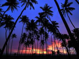 Dark Palm Tree Hd Template Backgrounds