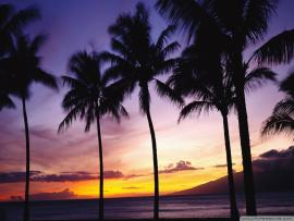 Dark Palm Trees Sunset Backgrounds