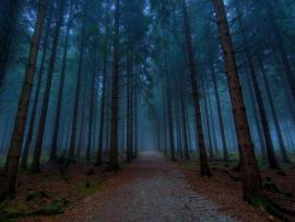 Dark Woods Hd Wallpaper Backgrounds