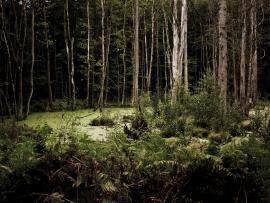 Dark Woods Wallpaper Backgrounds