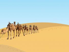 Desert Camels Backgrounds