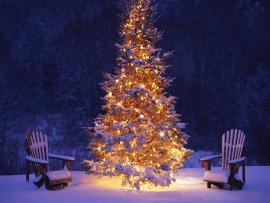 Desktop Christmas Tree  Hd   Backgrounds