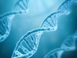 DNA Strands On Blue Backgrounds