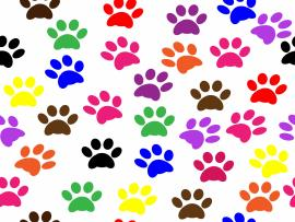 Dog Food Art Backgrounds