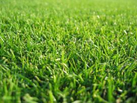 DREAM WALLPAPER Free Grass Slides Backgrounds