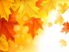 Dried leaf landscape sun nature Backgrounds