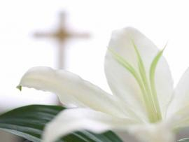 Easter PowerPoint With White Flower Download Backgrounds