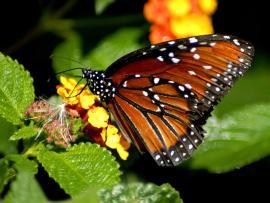 Elegant HD Butterfly Clip Art Backgrounds