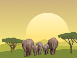 Elephant Migrations Backgrounds