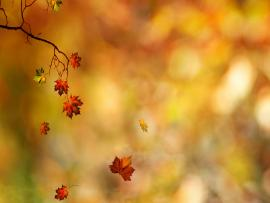 Fall Leaves 6016 2560x1600 Px High Resolution   Picture Backgrounds