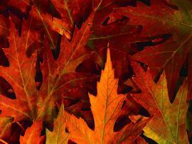 Fall Leaves Desktop Backgrounds