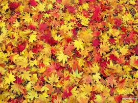 Fall Leaves Fall Leaves Hd   Quality Backgrounds
