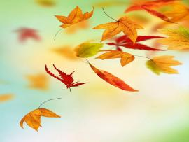 Fall Leaves Iphone  IPhones  Pinterest Template Backgrounds