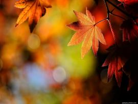 Fall Leaves Backgrounds
