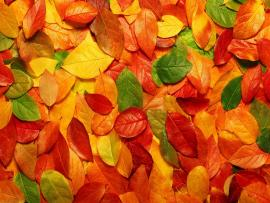 Fall Leaves Tumblr Autumn Leaves Backgrounds