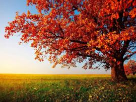 Fall Trees Clipart Backgrounds
