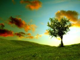 Fantastic Lonely Tree Photography  Frame Backgrounds