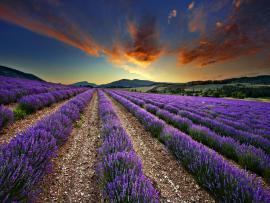 Fantastic Wiev Lavender Slides Backgrounds