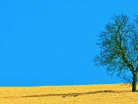 Field and Tree For PowerPoint  Nature Clip Art Backgrounds