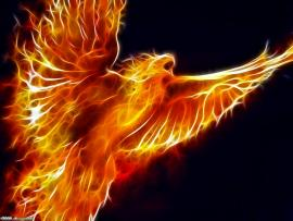 Fire Bird Photo Backgrounds