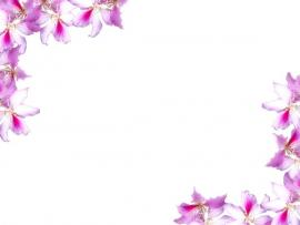 Floral Border With Flowers  Backgrounds
