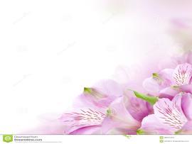 Flower Border Design Backgrounds