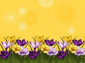 Flower Border image Backgrounds