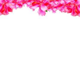 Flower Border Presentation Backgrounds