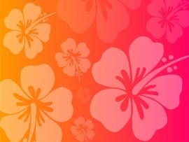 Flower Pink Orange Hawaiian Wallpaper Backgrounds