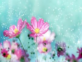 Flowers  Bests Graphic Backgrounds