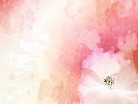 Flowers  Flower  Images Of Flower  #12 Free HD   Quality Backgrounds