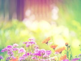 Flowers Download Backgrounds