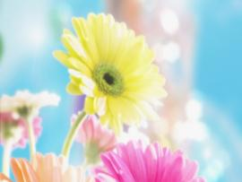 Flowers For Flower Lovers  Flowers Desktops  Wallpaper Backgrounds