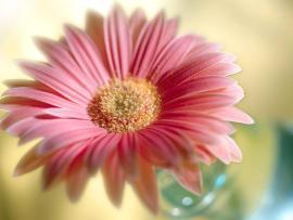 Flowers For Flower Lovers  Flowerss HD Desktop Beautiful   Frame Backgrounds