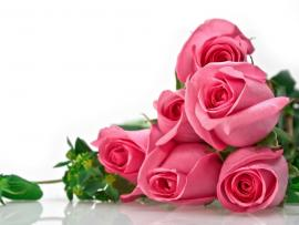 Flowers Roses Beautiful  image Backgrounds