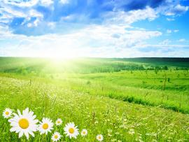 Flowers Sun Clouds Sky Nature Picture Backgrounds