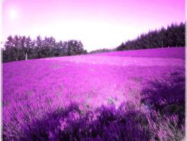 For > Lavender Design Backgrounds