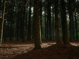 Forest Woods Download Backgrounds