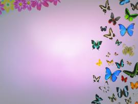Free Butterflies and Flowers For  Backgrounds