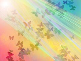 Free Butterfly Rain Light For  Art Backgrounds
