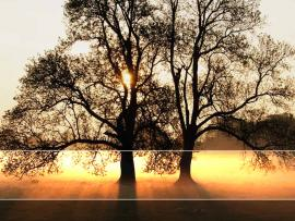 Free Tree Sunlight Landscape For PowerPoint  Nature PPT   Slides Backgrounds