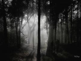 Ghost Dark Woods Backgrounds
