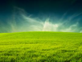 Grass  WIN10 THEMES Download Backgrounds