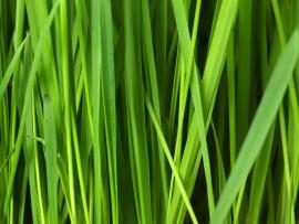 Grass Free Stock Photo  Public Domain Pictures Download Backgrounds